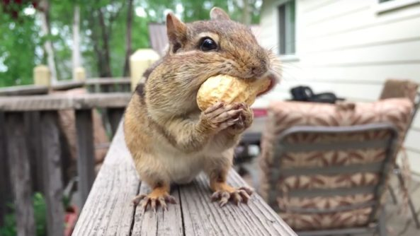 Shot-on-iPhone-squirell-video-001-593x334